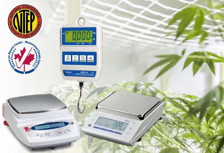 Marijuana Scales, Cannabis Scales